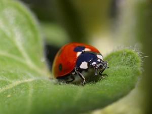 ladybird-1024x768